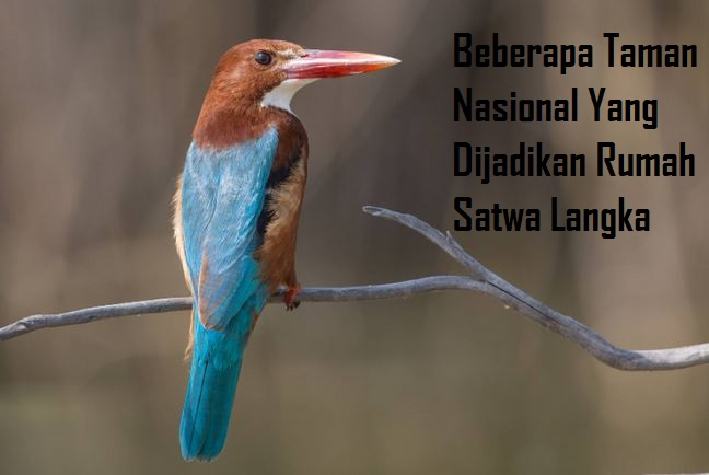 Beberapa Taman Nasional Yang Dijadikan Rumah Satwa Langka