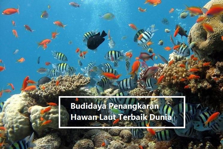 Budidaya Penangkaran Hawan Laut Terbaik Dunia