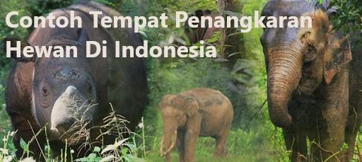 Contoh Tempat Penangkaran Hewan Di Indonesia