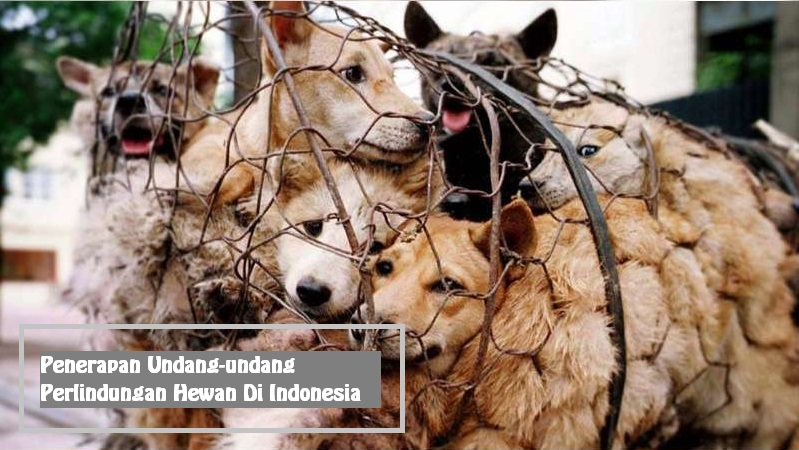 Penerapan Undang-undang Perlindungan Hewan Di Indonesia