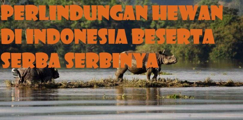 Perlindungan Hewan di Indonesia Beserta Serba Serbinya