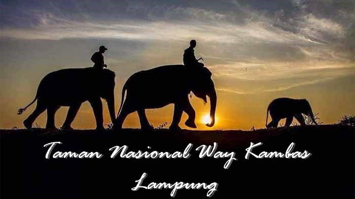 Taman Nasional Way Kambas, Lampung