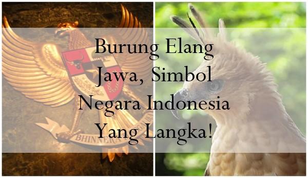 Burung Elang Jawa, Simbol Negara Indonesia Yang Langka!